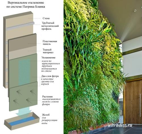 принцип вертикального озеленения