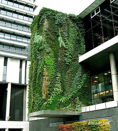 вертикальное озеленение экстерьера