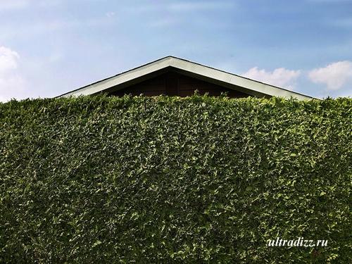кустарник закрывает фасад дома