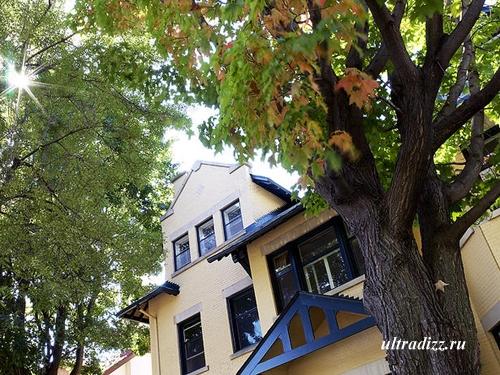 слишком высокие деревья перед домом