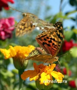 бабочки в ландшафтном дизайне
