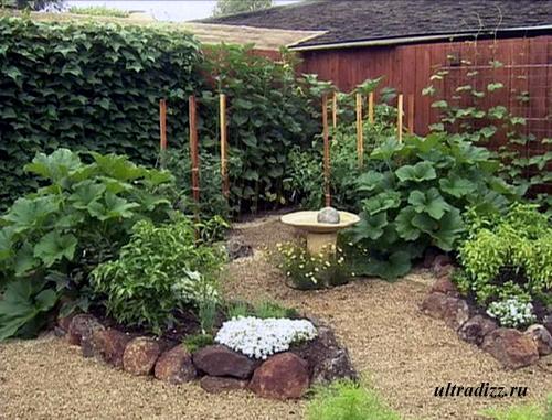 вьющиеся растения во дворе частного дома