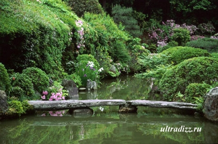 японский сад 2