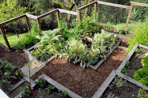 декоративный огород в частном дворе