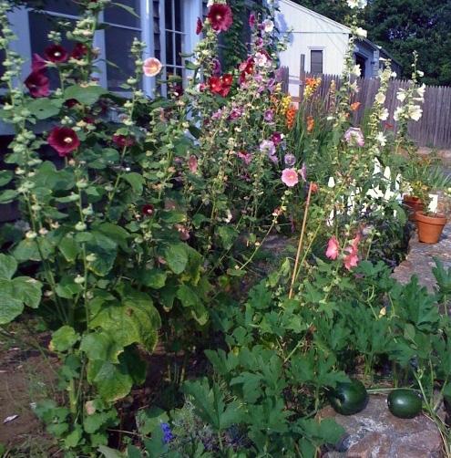 декоративный цветочно-овощной огород