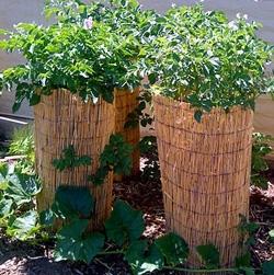 декоративные формы для картофеля