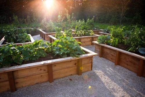 декоративный огород в дизайне частного двора