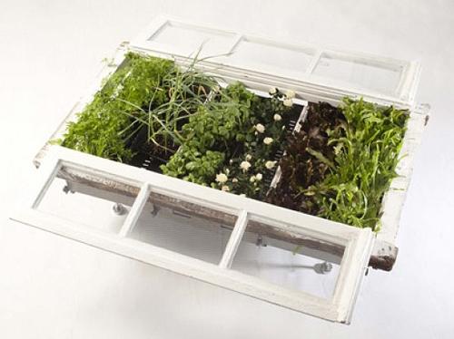 выращивание растений в старой раме