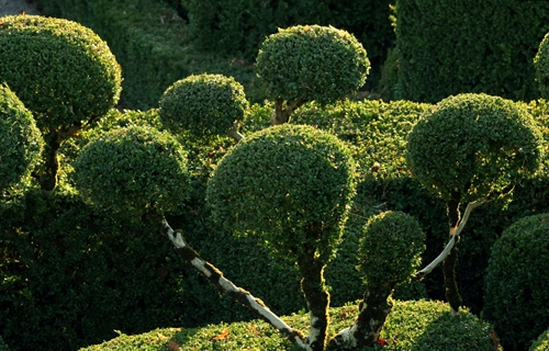 фрагмент садового лабиринта
