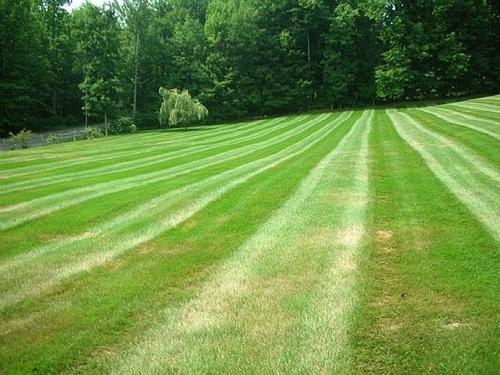 дизайн газона с параллельными полосами