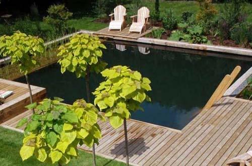 дизайн натуральных бассейнов 5