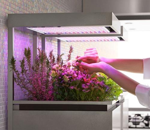 растения на кухне под светодиодными лампами