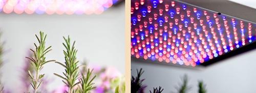 синие и красные светодиоды для растений в интерьере