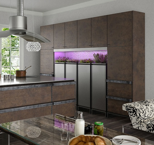 живые растения в интерьере современной кухни