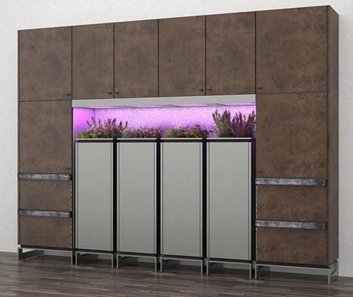 растения в интерьере кухни
