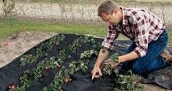 применение геотекстиля для защиты от сорняков