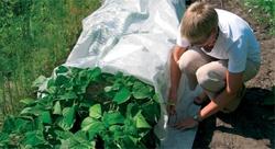 применение геотекстиля для защиты растений от заморозков
