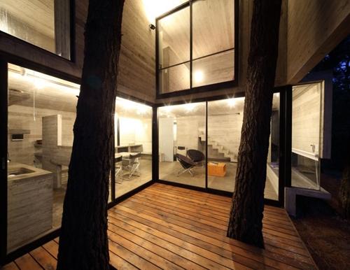 терраса с соснами в доме в лесу