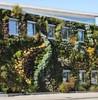 примеры вертикального озеленения