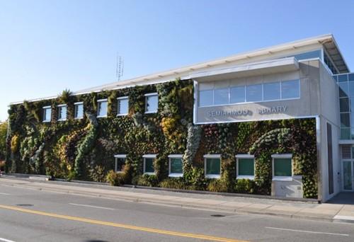 пример вертикального озеленения фасада