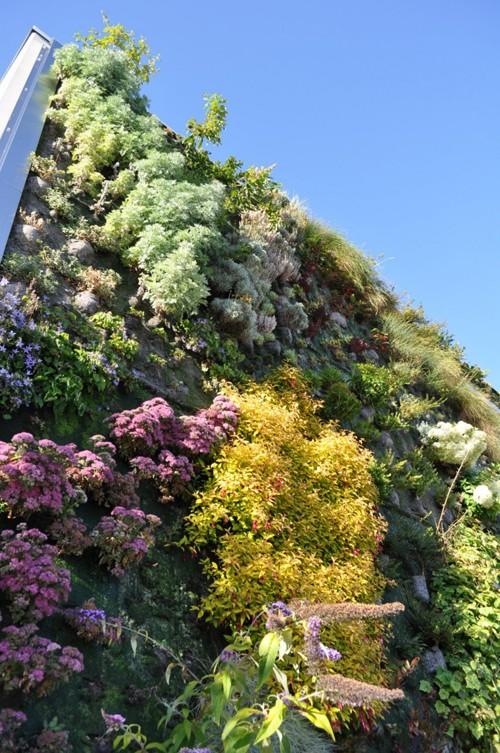 фасадное вертикальное озеленение