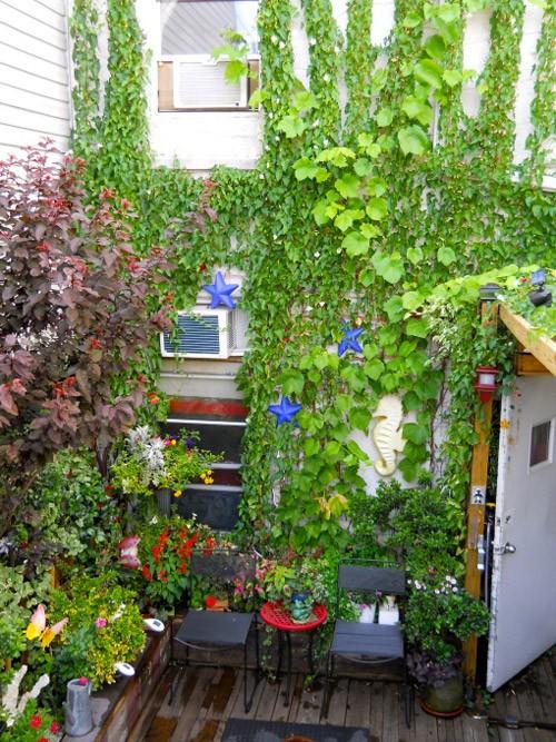 вьющиеся растения в саду на крыше