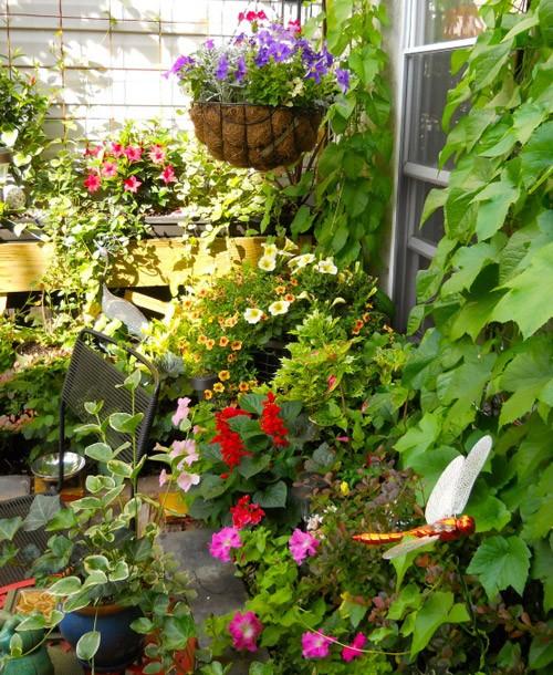 цветы в саду на крыше