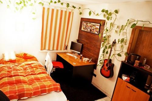вьющиеся комнатные растения для детской комнаты