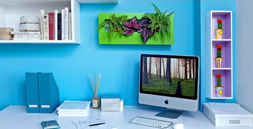 комнатные растения у компьютерного стола