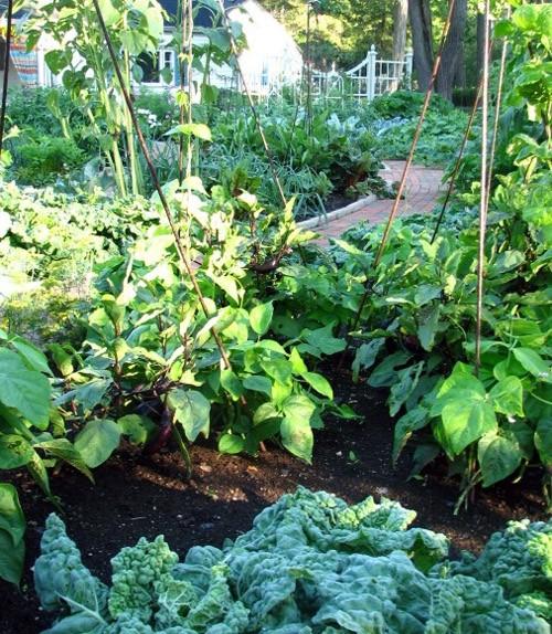красивый огород в частном дворе