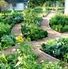 ландшафтный дизайн огорода
