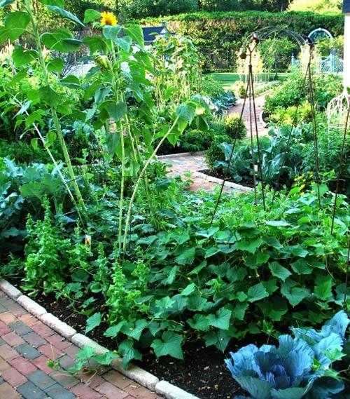 огород в ландшафтном дизайне двора