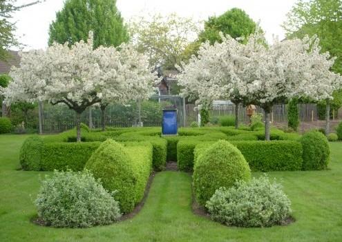 мини сад с живой изгородью