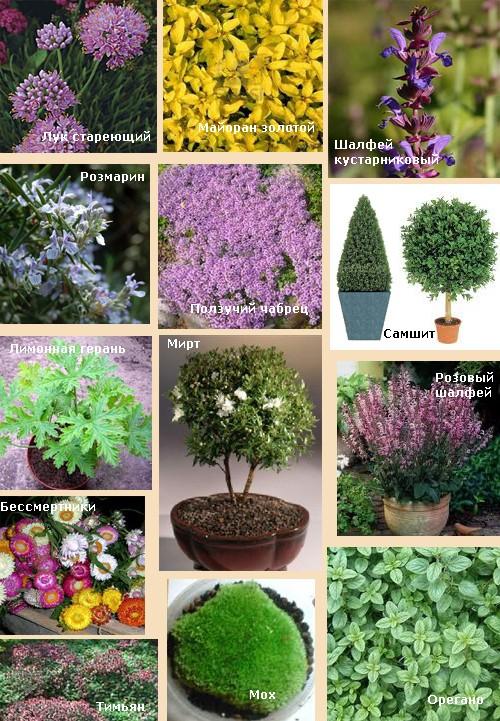 варианты растений для сада фей