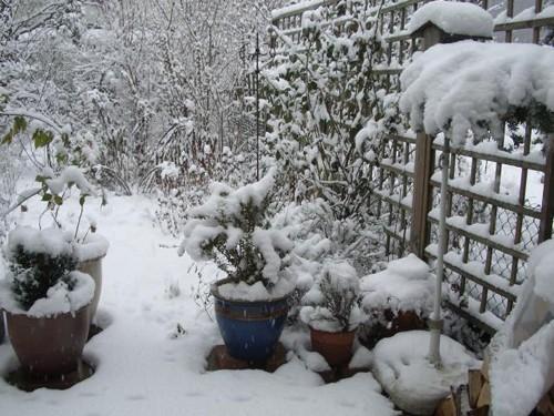 вазоны под снегом