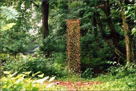 водопад из семян в садовом дизайне