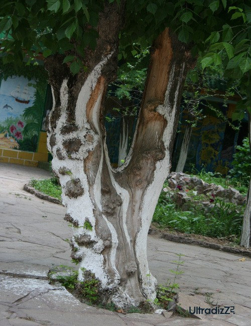 художественная побелка старого дерева