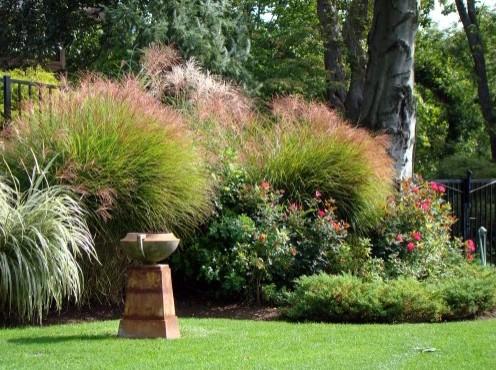 скульптурные растения в дизайне сада