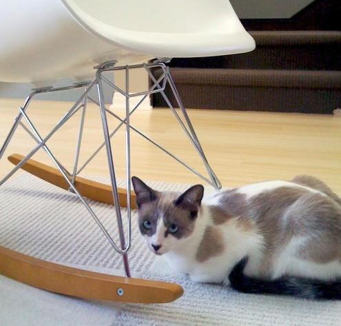 ковровая плитка в интерьере с кошкой