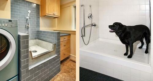 душ для домашних животных