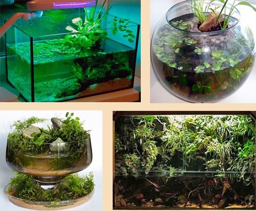 аквариум в стиле ваби-куса
