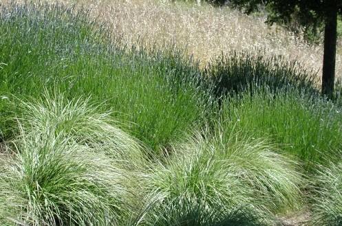 травы разного цвета в дизайне сада
