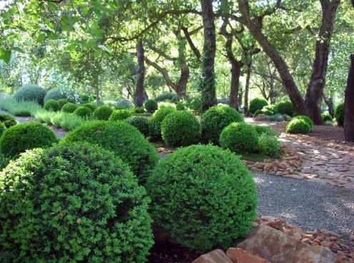создание скульптурной формы растений в саду