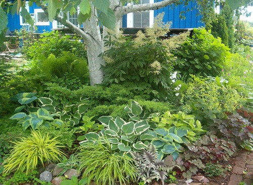 листва в качестве главного элемента сада