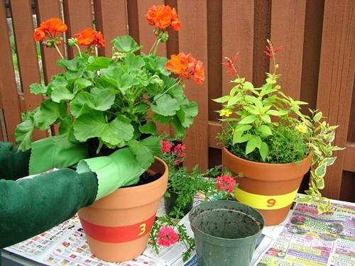 высаживание цветов