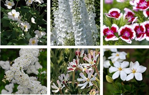примеры цветов для лунного сада