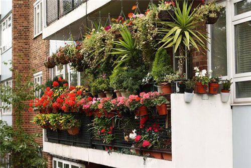 сад на балконе с подвесными горшками