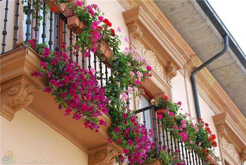 цветущий сад на маленьком балконе
