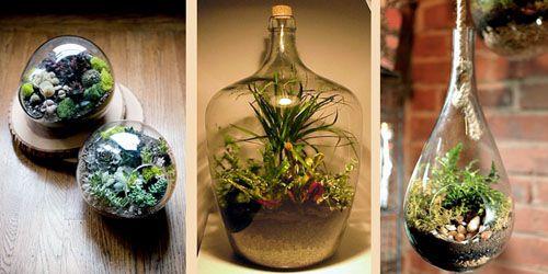 декоративные сады в бутылках