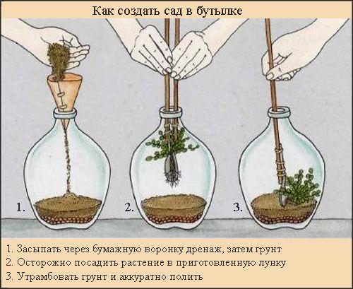сад в бутылке своими руками